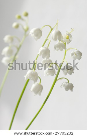 Bouquet of the lily of the valley on light background. Shallow DOF. - stock photo