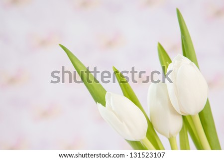 Bouquet of three beautiful white tulips close up