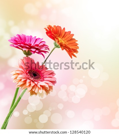 Bouquet of Three gerbera flowers on blur background