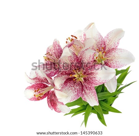 Bouquet of tiger lilles isolated on white background