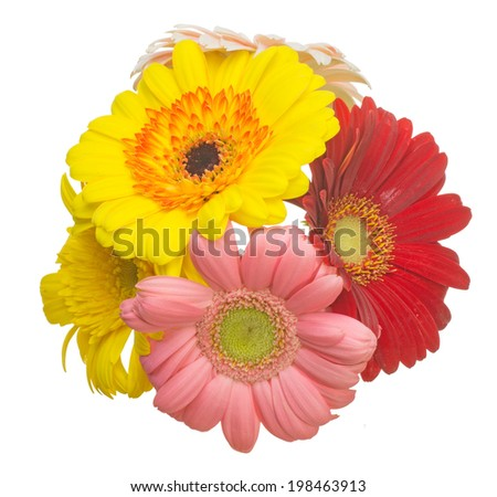 Bouquet of Transvaal daisy in a white background
