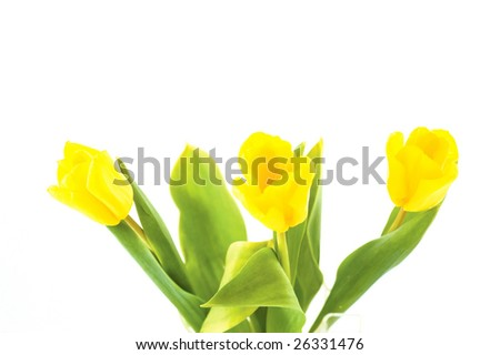bouquet of tulip and pretty ladybird on the white background