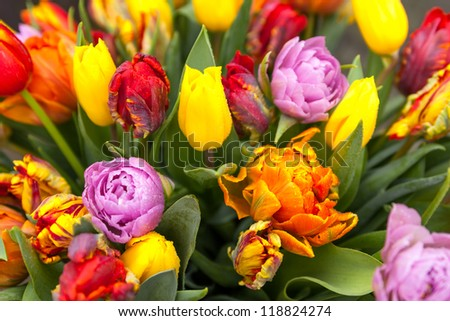 Bouquet of tulips - stock photo
