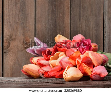 bouquet of tulips in front. Made in with Low grip/depth. (Selektive Grip.) - stock photo