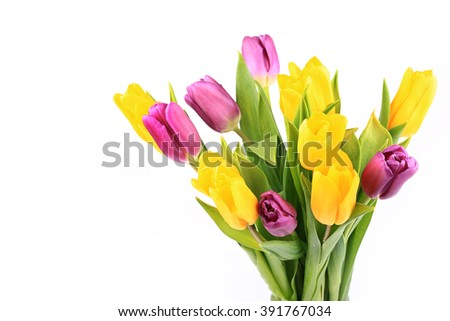 bouquet of tulips isolated on white background selective soft focus toned photo - stock photo