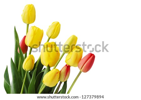 Bouquet of  tulips on a white background - stock photo