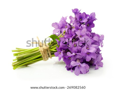 Bouquet of violets isolated over white - stock photo