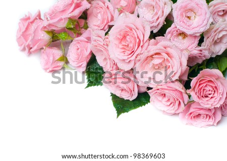 Bouquet of wet pink roses on a white background, isolated