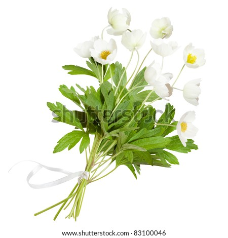 Bouquet of white anemone flowers - stock photo