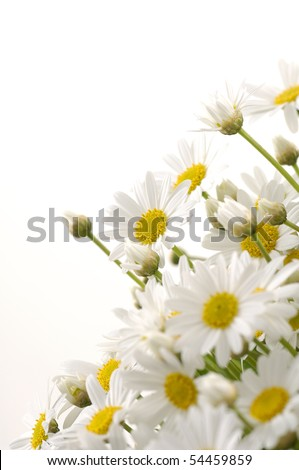 bouquet, of white marigold