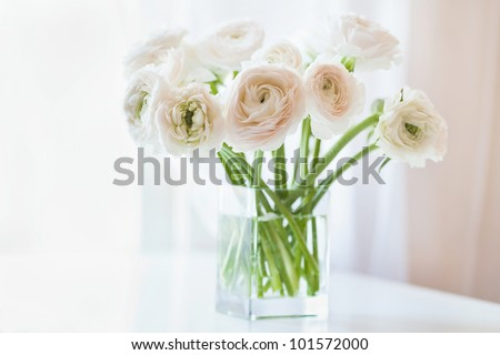 Bouquet of white ranunculus  in glass vase near the window, horizontal photo - stock photo