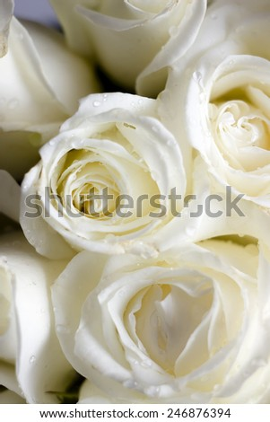 bouquet of white roses,macro.