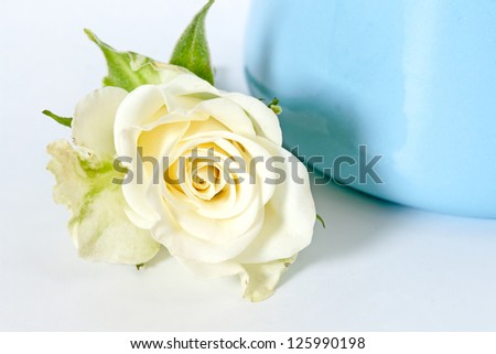 Bouquet of white roses on a blue background