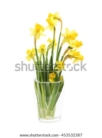 Bouquet of yellow narcissus flowers in a glass of water, composition isolated over the white background