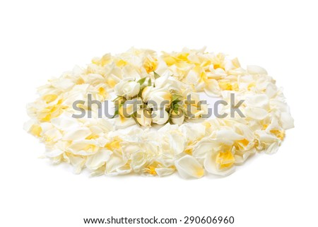 bouquet of yellow roses and rose petals isolated on white background - stock photo