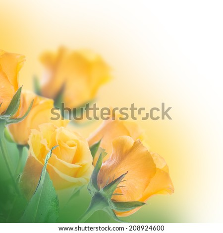 Bouquet of yellow roses, floral background - stock photo