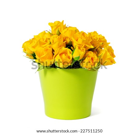 bouquet of yellow roses in a beautiful flowerpot  isolated on a white