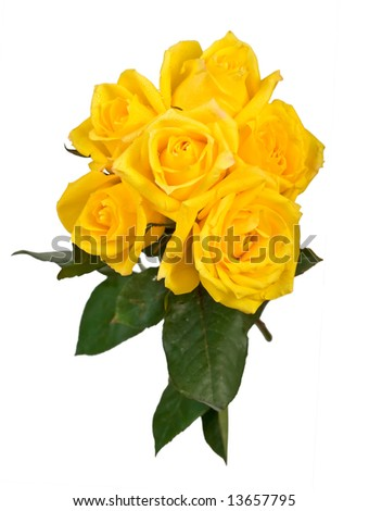 bouquet of yellow roses on white - stock photo