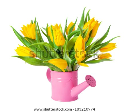 Bouquet of yellow tulips in pink watering can  - stock photo