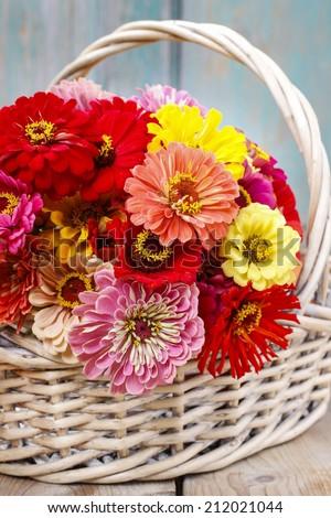 Bouquet of zinnia flowers in wicker basket.  - stock photo