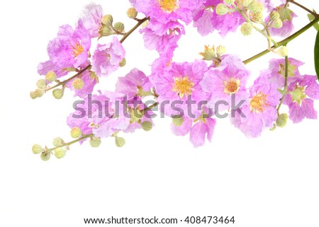 Bouquet Pink Flowers isolated white background - stock photo