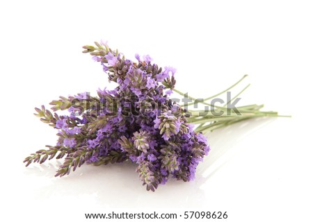Bouquet purple Lavender flowers isolated over white