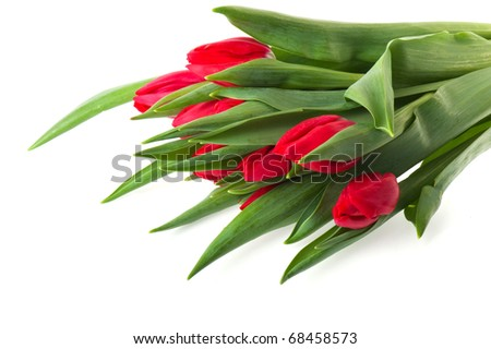 Bouquet red tulips isolated over white background