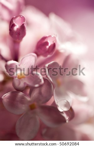 Bouquet soft, out of focus lilac flower - stock photo