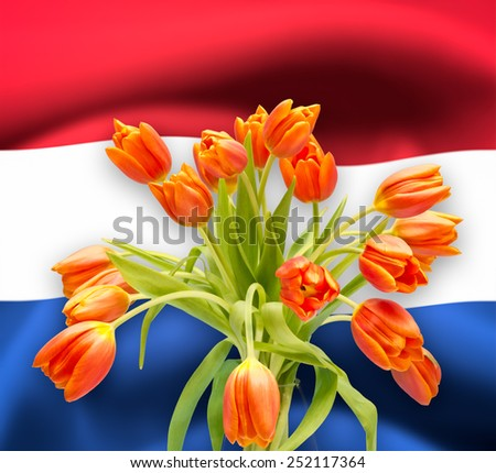 Bouquet with orange tulips on dutch flag - stock photo