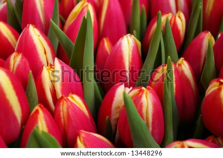 Bouquet with pink tulips. Focus on the middle one.