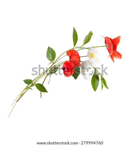 Bouquet with red poppies and white anemones isolated on white