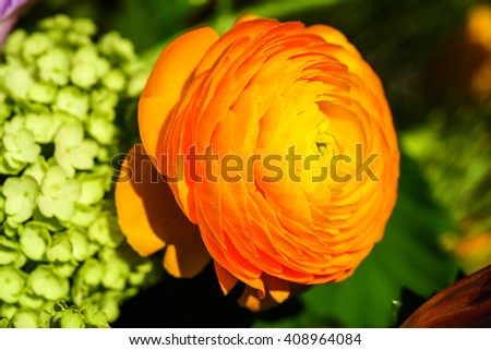 Bouquet with yellow ranunkulyus on the background of green leaves - stock photo