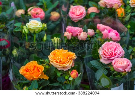 bouquets roses for sale at a florist's shop with transparent wrapping paper - stock photo