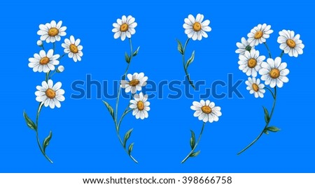 Bouquets with daisies 2 - stock photo