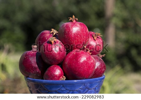 bowl full of pomegranates with blurred outdoor background, close-up