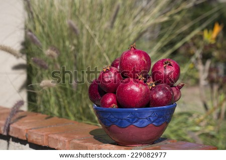bowl full of pomegranates with blurred outdoor background, horizontal crop