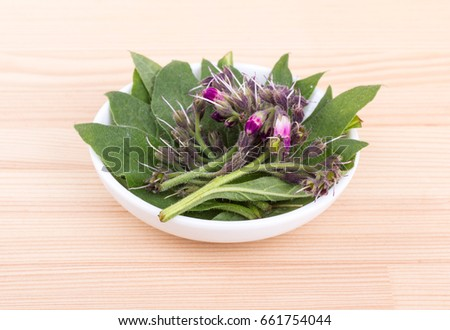 Bowl of Comfrey / Comfrey leaves and flowers / Comfrey