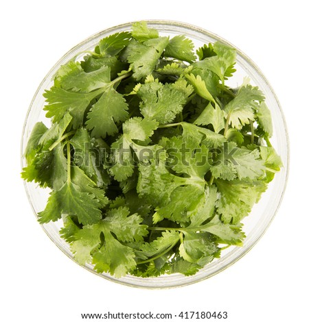 Bowl of fresh cilantro isolated on white and viewed from directly above.