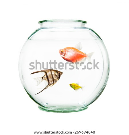 Bowl of pet fish including an angelfish and goldfish - stock photo