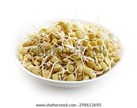 bowl of sprouted lentil seeds isolated on white background - stock photo