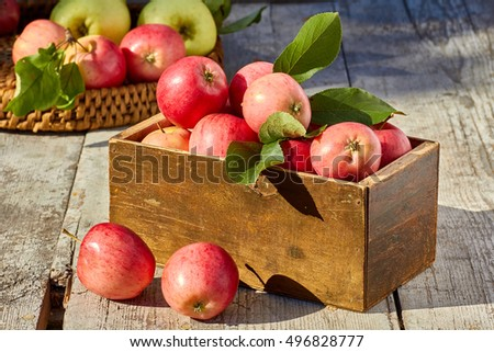 Box and wicker tray of freshly harvested apples in on wooden table