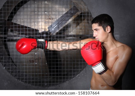 Boxer - stock photo