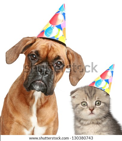 Boxer dog and Scottish fold cat in party cap on white background