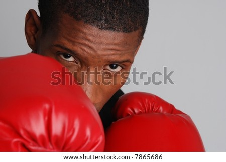 Boxer portrait - stock photo
