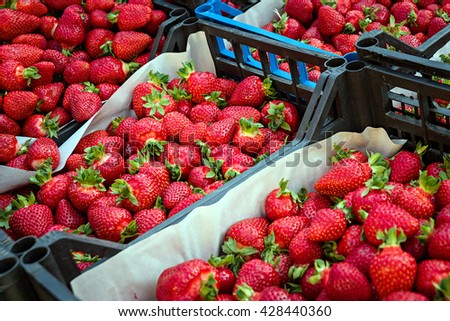 Boxes of red strawberries in farmer market. Sweet strawberries - stock photo
