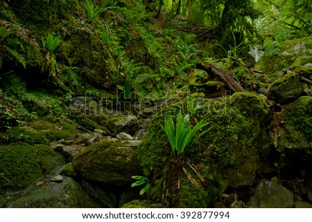 Boxwood moss-covered forest  - stock photo