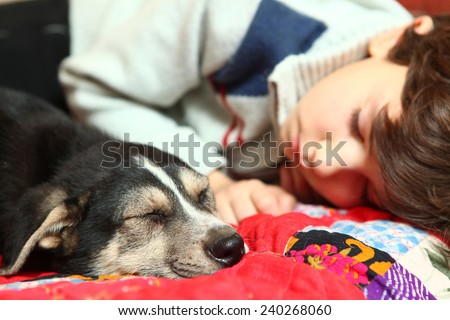 boy and little puppy sleeping on the bed - stock photo