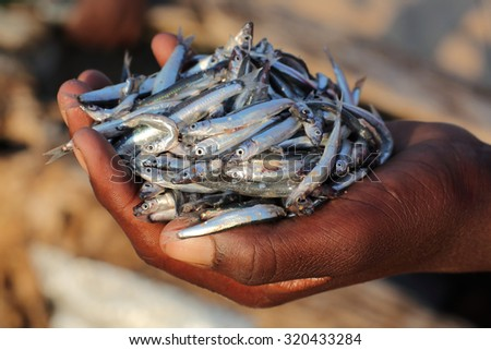 Boy carrying small fish in his hand at the beach in Cape Maclear, Malawi. - stock photo
