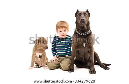 Boy, dog and puppy Pit bull together isolated on white background - stock photo