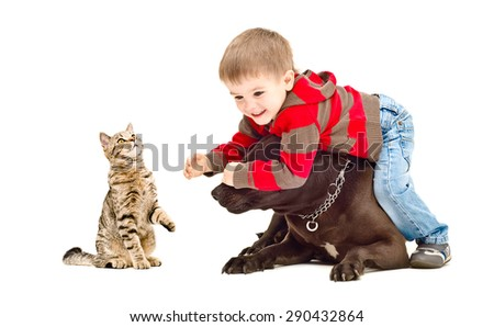 Boy, dog Staffordshire Terrier and cat Scottish Straight cheerfully playing together, isolated on white background - stock photo